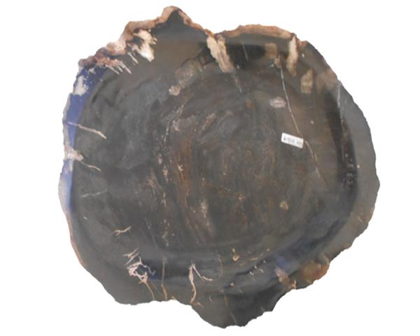 Petrified Wood Plate Medium Size#PLT356