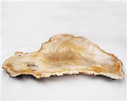 Petrified Wood Large Plate#PLT36