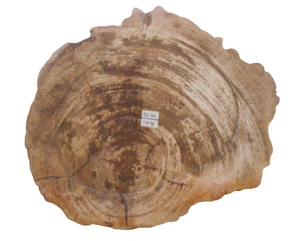 Petrified Wood Plate Full Polish#PLT366