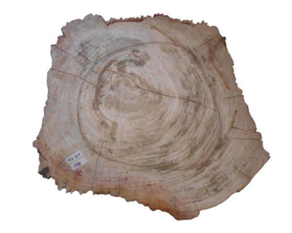 Petrified Wood Plate Full Polish#PLT367
