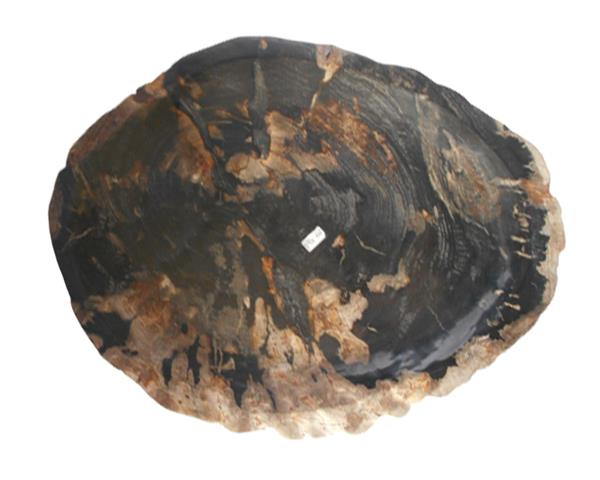 Petrified Wood Plate Large Size#PLT372
