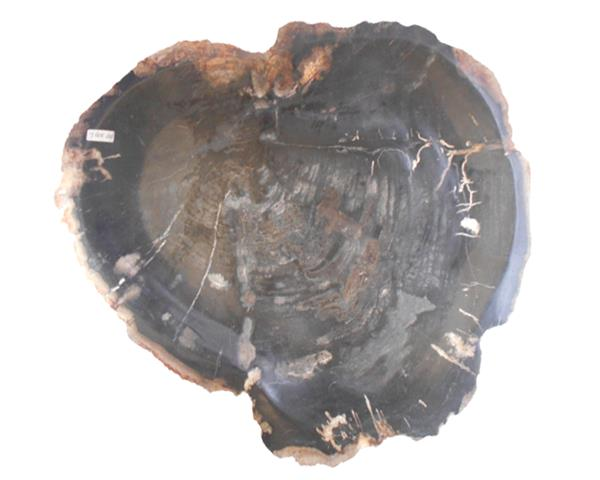 Petrified Wood Plate Large Size#PLT379