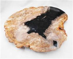 Petrified Wood Large Plate#PLT38