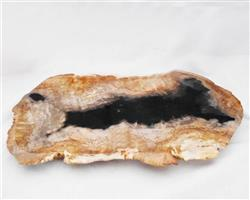 Petrified Wood Large Plate#PLT39