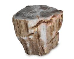 Petrified Wood Stool Round Top Polish#SRTP25