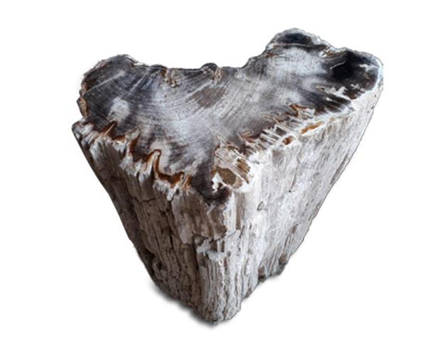 Petrified Wood Stool Round Top Polish#SRTP30