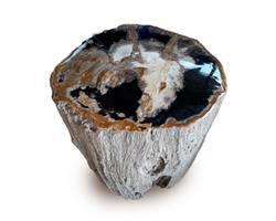 Petrified Wood Stool Top Polish#SRTP41